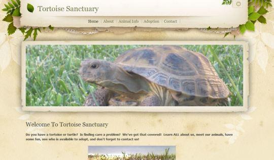 Toitoise Sanctuary - Natalie C.